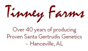 Tinney Farms